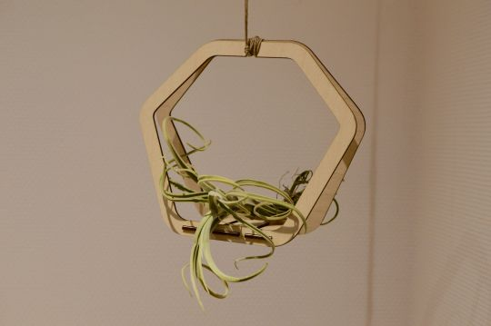 Wooden Air Plant Holder | Belgunique