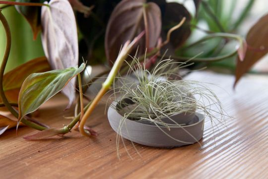 Eclips Air Plant Holder | Belgunique