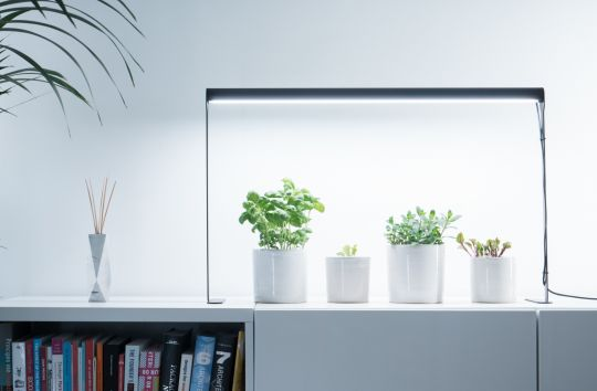 Bloom: Plant Lamp | Belgunique