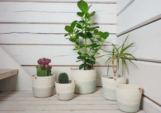 Planter | Belgunique